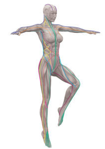anatomy-trains-movement-professionals